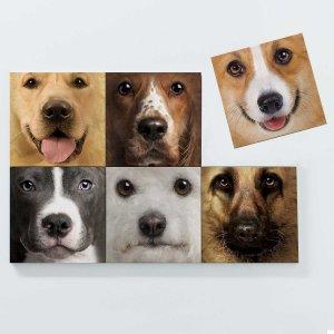 Porta Copos Magnéticos – Cachorros